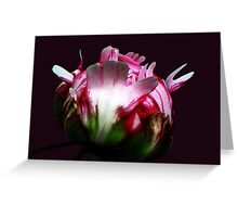 Life Unfolds Greeting Card