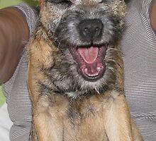 Dog Yawning by AleFest