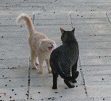 Cat Argument by AleFest