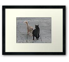 Cat Argument Framed Print