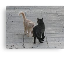 Cat Argument Canvas Print