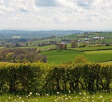 Beautiful French countryside by Morag Anderson