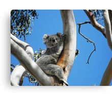 Having a lazy day Canvas Print