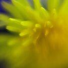 Soft Yellow by Jessica Hardin