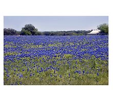 Bluebonnet Fields by Roger Bernabo