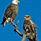 Eagles Old and Young by James Kyle