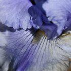 Blue Tone by Joy Watson