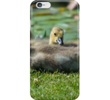Little Goslings iPhone Case/Skin