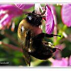 Sleeping Bee by Brenda Boisvert