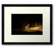 Kangaroo Family Framed Print
