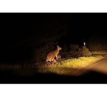 Kangaroo Family Photographic Print