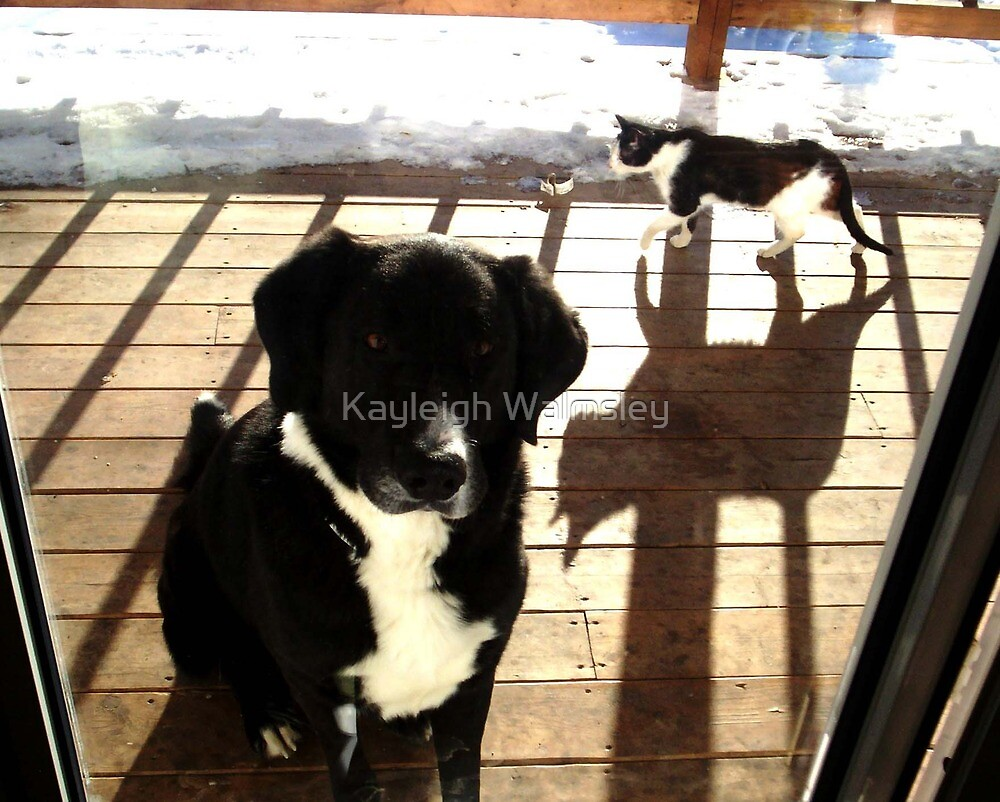 The creeping shadow by Kayleigh Walmsley