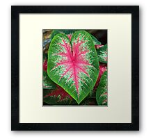 McNeely Leaf Framed Print