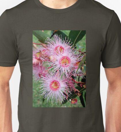Eucalyptus leucoxylon Rosea  Pink flowering gum  Australia T-Shirt