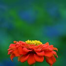 Zinnia by Margaret Barry