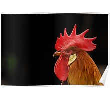 Rooster at Acton Scott Historic Working Farm Poster