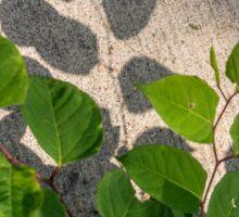 Leaves Shadows Sticker