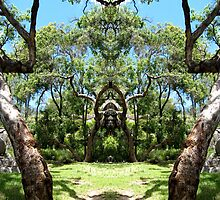Two trees at the entrance. by Marilyn Baldey