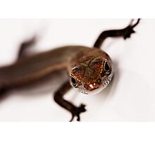 Tiny Skink at 2.5 magnification Photographic Print