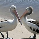 Pelican tete a tete by Robyn Williams