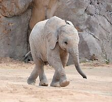Baby Elephant by Kathleen Brant