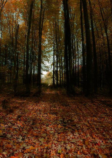 A Walk in the Woods by Melody Ricketts