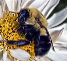 Busy bee by cherylc1