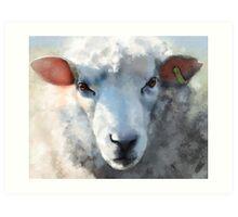 Winter sheep face, Romney Marsh Art Print