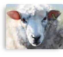 Winter sheep face, Romney Marsh Canvas Print