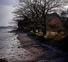 Life on the Edge by Richard Hamilton-Veal