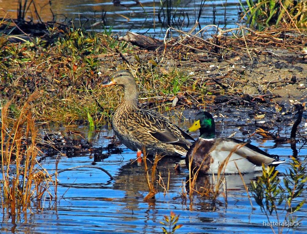 A Couple Of Ducks by hatterasjack