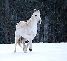Symphony in the Snow by Chris Snyder