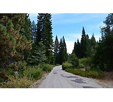 A road through South California forest. Lush trees under  beautiful summer blue sky.  Photographic Print