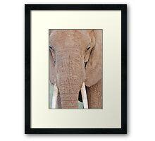 Up Close Framed Print