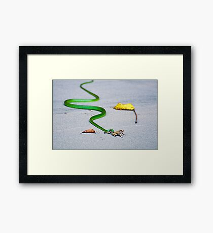 Frog's Last Breath Framed Print