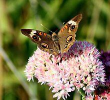 Butterfly Queen by rasnidreamer