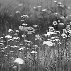 Black&White Flowers by francescak