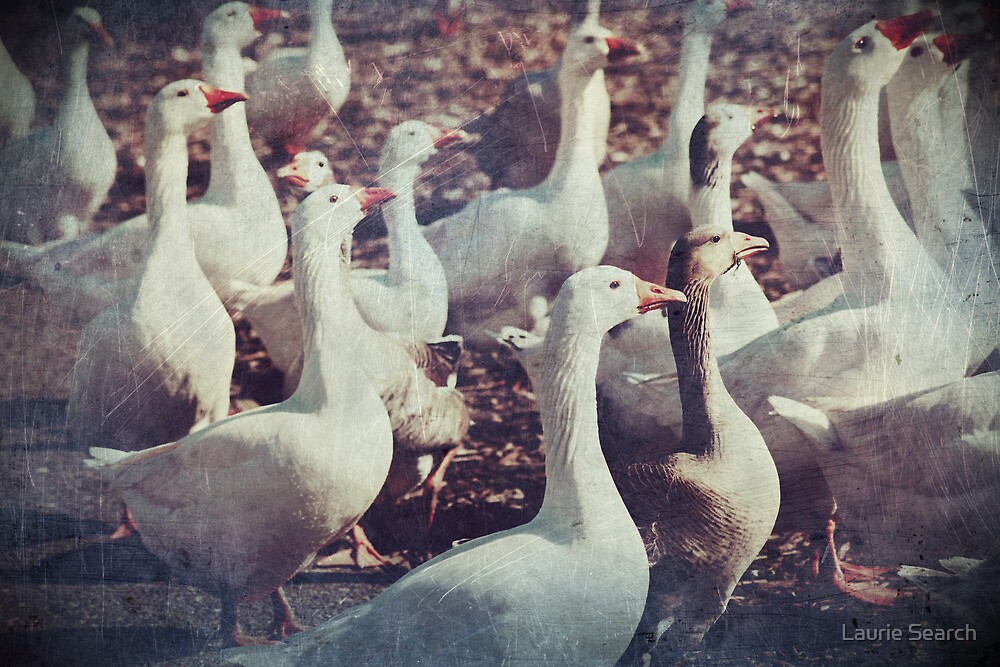 Killer Geese by Laurie Search