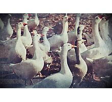 Killer Geese Photographic Print