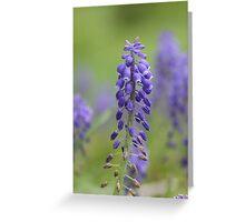 Delphinium Flowers Greeting Card