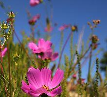 Pink Flowers by snehit