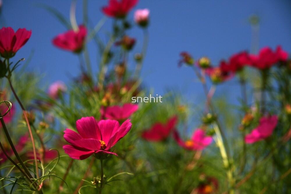 Flower Garden by snehit