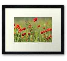 Poppy plantation Framed Print