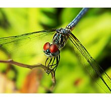 Ruby Eyes - dragonfly print Photographic Print