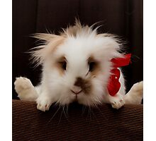 Lion head bunny flying behind a chair Photographic Print