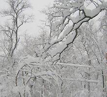 Wisdom and Beauty in Winter by Quinn Blackburn