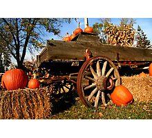 Pumpkin arrangement for sale Photographic Print