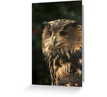 Portrait of an Eagle-owl  Greeting Card