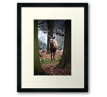 Wild Red Deer Framed Print
