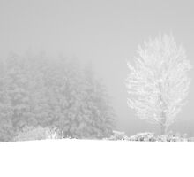 White tree III by thonycity